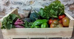 [Tgn - Consumo responsable] Cesta de verdura agroecologica